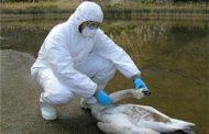Caso de gripe aviar en Camboya