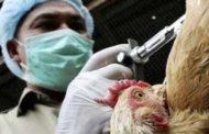 Situación de la gripe aviar en China