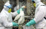 Gripe aviar en Indonesia: Actualización