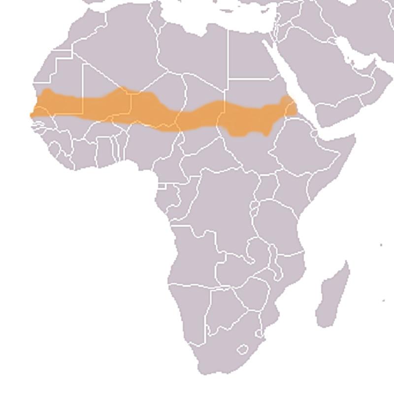 Crisis actual en el Sahel
