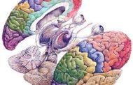 El ejercicio activa una proteína que estimula la memoria
