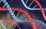 Micronutrientes mejoran el ADN del esperma en hombres mayores