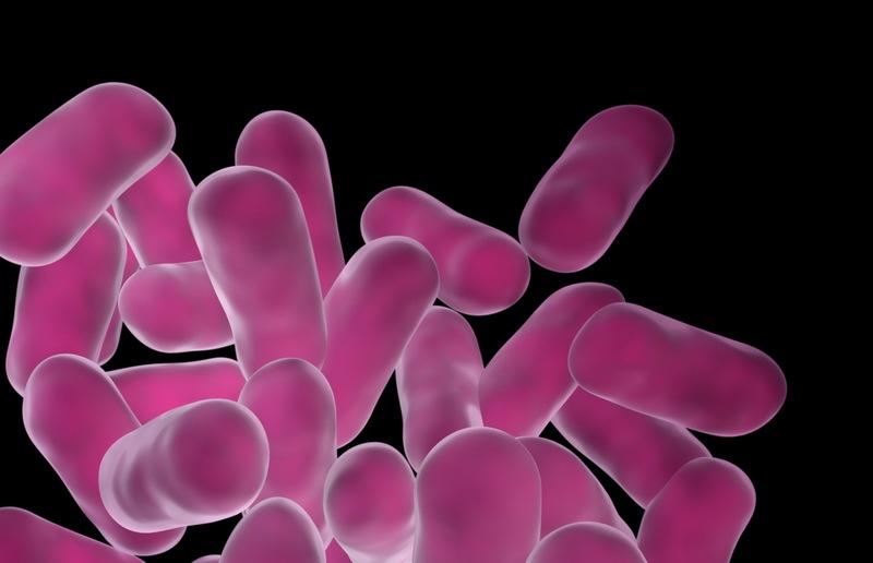 El Mundo de los Probióticos