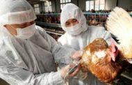 Infección humana por virus de la gripe aviar A(H7N9) en China y actualización