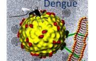 ¿Qué está pasando con el dengue en América?