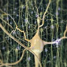 El aumento del azúcar en la sangre se asocia al Alzheimer y otras demencias