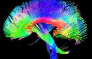 El ejercicio aeróbico mejora las conexiones del cerebro de los niños