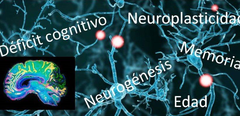 La neuroplasticidad: ¿una vía para mejorar nuestro cerebro?