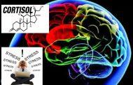 Cortisol, edad, función cognitiva y estrés