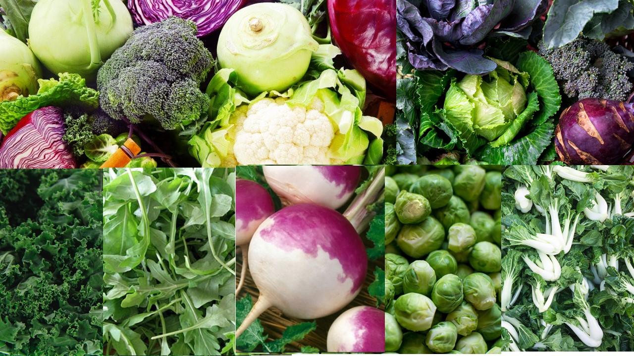 Vegetales crucíferos y nuevas evidencias de sus beneficios para la salud