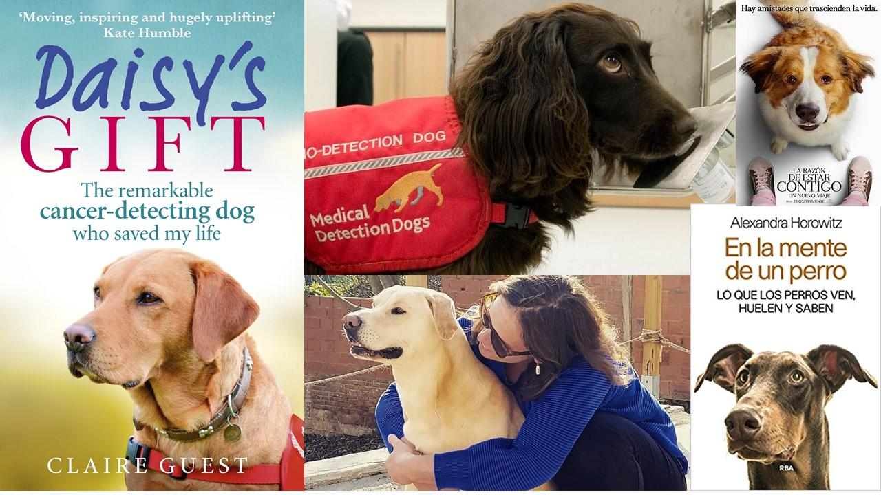 """El olfato de los perros: Una esperanza contra enfermedades u """"otra razón de estar contigo""""."""