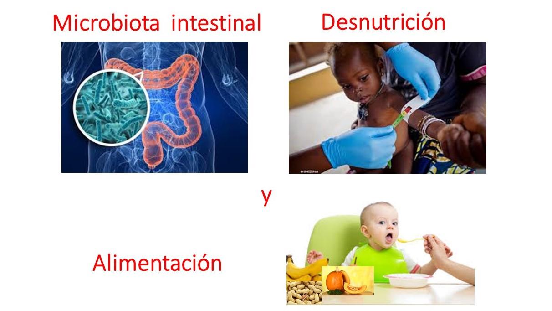 ¿Podría la microbiota intestinal afectar la recuperación nutricional en la desnutrición?