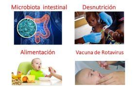 ¿Baja eficacia de la vacuna de rotavirus en comunidades muy pobres está asociada a la flora intestinal?