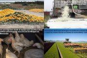 Pérdidas y Desperdicios de Alimentos en tiempos de COVID-19
