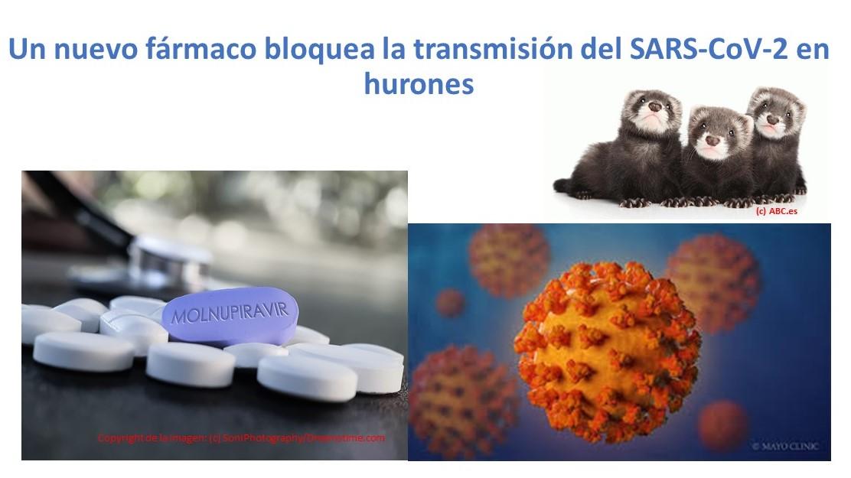 Nuevo tratamiento altamente potencial para reducir transmisión del SARS-CoV-2