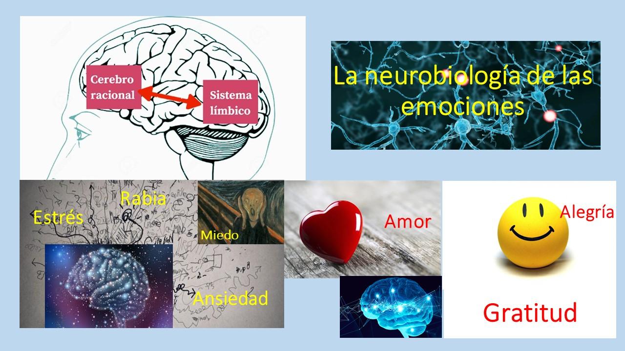 Neurobiología: cerebro emocional versus cerebro racional