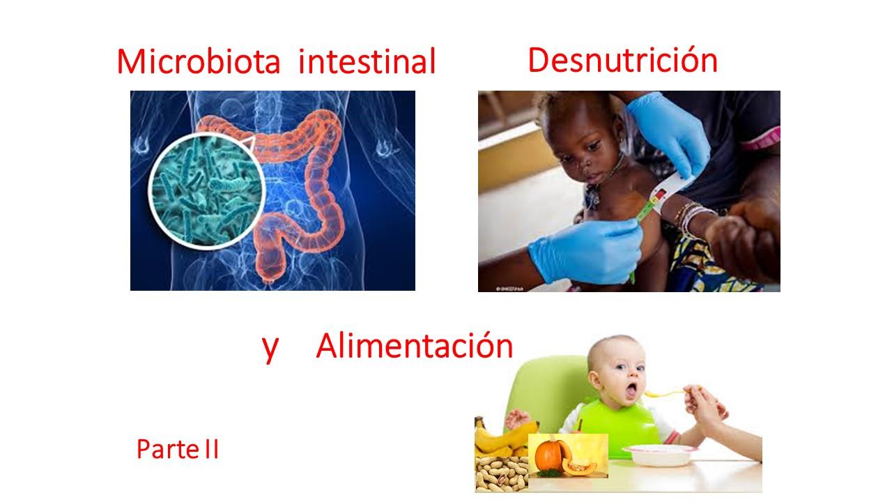Impacto de la flora intestinal en la desnutrición. Parte II